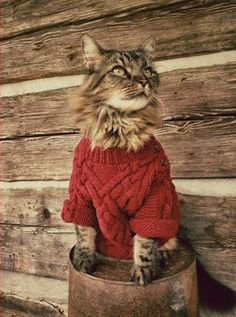 -because it's a cat in a sweater Funny Animal Pictures, Funny Animals, Animal Pics, Crazy Cat Lady, Crazy Cats, Knitted Cat, Cat Sweaters, Cat Costumes, Here Kitty Kitty