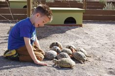 Some really good Russian tortoise information here.