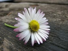 Daisies....especially the ones that have pink underneath their petals....daisy chains