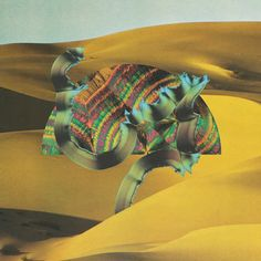 Django Django:  Animal Collective meets Devo...in Scotland...and does a touch of acid.