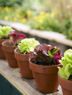"""Grow a Bowl of Salad in Pots  Salad greens are among the easiest vegetables to grow, require little space and mature in a few weeks. Here's how to nurture a healthy """"salad bowl"""" close to your kitchen."""
