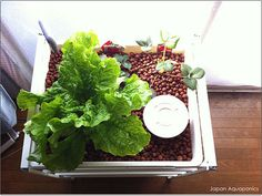 Micro Aquaponics we could totally fit this in the apartment what do you say?