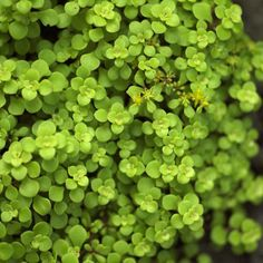 Enjoy these ultra-easy, low-water plants in your garden.