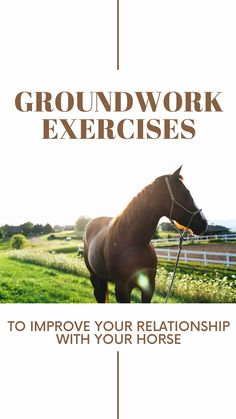 Groundwork Exercises To Improve Your Relationship With Your Horse Horseback Riding Tips, Horse Riding Tips, Ground Work For Horses, Horse Therapy, Horse Exercises, Horse Care Tips, Horses And Dogs, Horse Training, Horse Farms