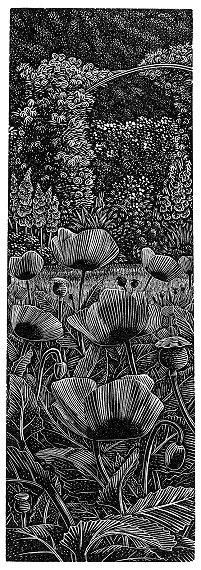 'Giverny: Poppies' by Andy English Black And White Drawing, White Art, Block Prints, Art Prints, Graphic Illustration, Illustrations, Scratchboard, Amazing Paintings, Wood Engraving