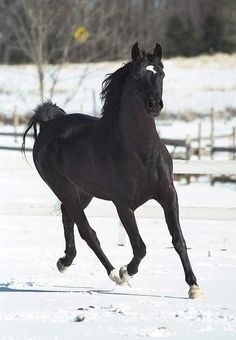 Beautiful horse trotting through the snow....