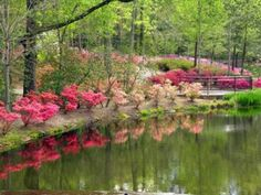 Calaway Gardens just outside of Columbus GA. One of my favorite places ever. If you are ever nearby in the spring, you must go!