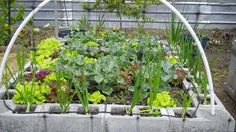 Raised-Bed Cinder Block Garden. Use the cinder blocks as a border, for larger vegetables, and plant plants, such as strawberries, in the small holes.