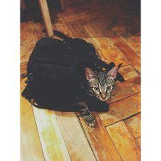 My kitten 2015