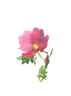 dog rose watercolor set of small cards