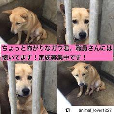 📢 #拡散希望 📢 #栃木県 で #雑種 #犬 #里親募集中! この子には家族がいません。 犬舎のままではなくて柔らかいお布団の上で寝かせてあげたいです。  優しい家族を見つけてあげたいです! よろしくお願いいたします! #里親募集_栃木 ・ ・ 拡散方法はTwitterやFacebookでも構いません。  拡散していただけると繋がる命があります✨ どうかご協力をお願いいたします! ・ ・ 「ペットのおうち」という里親募集サイトに登録されています。  この子の家族になりたい! 質問したい!という方は私のプロフィール欄【@animal_lover1227 】にリンクを貼っています。 詳細条件にあるキーワードに 115328 と入力するとこの子のページが開きます。「里親を申し出る・質問する」  の赤いボタンがありますのでそちらをクリックしてください。 ・ ・ ペット基本情報 施設名#宇都宮保健所 ここには連絡しないでください! 施設住所#栃木県宇都宮市 種類#雑種 年齢成犬 (推定3歳前後) サイズ中型犬雄雌♂ オス ワクチン接種済み去勢去勢していません…