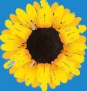 The Girls theatre tickets - Phoenix Theatre - Gary Barlow and Tim Firths musical adaptation of Calendar Girls is transferring to the West Ends Phoenix Theatre from February 2017. Gary Barlow and Tim Firth™s new British musical, THE GIRLS, based o http://www.comparestoreprices.co.uk/january-2017-3/the-girls-theatre-tickets--phoenix-theatre-.asp