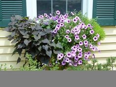 Window Box Contest Entry Burst of Summer Color