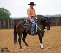 Riding Exercise #13: Draw to a Stop  Goal: To move the horse forward on a loose rein at any gait, then pick up on the reins with the lightest degree of pressure, causing the horse to immediately come to a complete stop and soften vertically to the bit.  More about the exercise: https://www.downunderhorsemanship.com/Store/Product/MEDIA/D/252/
