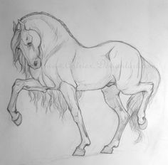 Realistic Horse Sketch by WildSpiritWolf on DeviantArt Horse Pencil Drawing, Horse Drawings, Cute Animal Drawings, Pencil Art Drawings, Animal Sketches, Cute Drawings, Drawing Sketches, Drawing Ideas, Drawing Animals