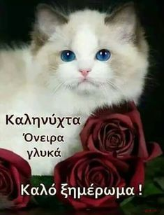 Good Night, Good Morning, Beautiful Pink Roses, Cats, Happy, Movie Posters, Animals, Facebook, Amazing