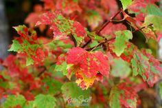 Fall Colors, NH, Oct. 2010 | Flickr - Photo Sharing!