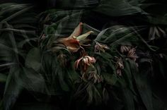 TINE POPPE PHOTOGRAPHY Not Dark Yet, International Photography Awards, Insect Species, Social Challenges, Dark Flowers, Taking Pictures, Plant Leaves, Nature, Plants