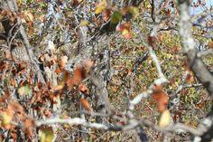 Puedes encontrar al búho africano escondido entre los árboles de esta fotografía? #viral
