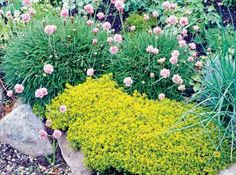Herbs are masters at adapting to a variety of soils and reproduce all by themselves. As living mulches, they're rivaled by none.