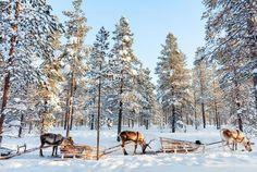 19 slika koje dokazuju da je Finska zemlja iz mašte!