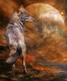 Spirit Of The Wolf by Carol Cavalaris