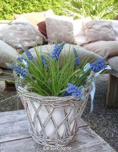 Spring Flowers *grape hyacinths*