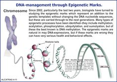 The two main components of the epigenetic code. 193_Part-Three-Figure-185.gif
