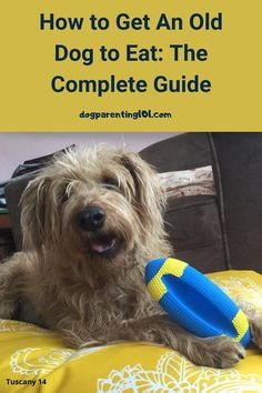 I know how worrying it is when your old dog won't eat. You'll find all the help and advice you need in this guide. #fussyeater #seniordogcare #seniordoghealth Dog Care Tips, Pet Care, Anti Nausea Medication, How To Help Nausea, Slippery Elm, Guide Dog, Food Bowl, Dog Eating, Medical Prescription