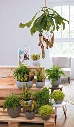 1000 images about truffaut plantes d 39 int rieur on - Plantes interieur depolluante ...