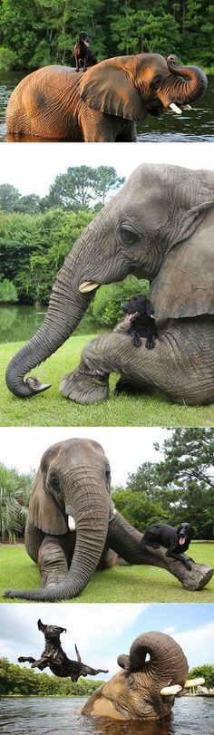 Le sigh, be ready to go aww! Who would think that an elephant and a dog can be the best of friends? Well, meet Bubbles , the charming 32 . Baby Animals, Funny Animals, Cute Animals, Wild Animals, Mundo Animal, My Animal, Beautiful Creatures, Animals Beautiful, Best Friends For Life