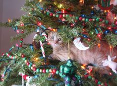 109 Cats Celebrating Christmas