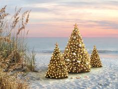 Twilight Christmas Trees on the Beach by Alan Giana. Print on Canvas.