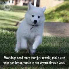 Dogs love (and need) to run, too! #TipTuesday