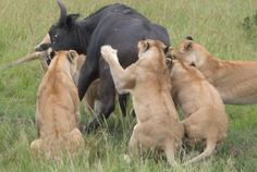 Kenya Safaris & Tours