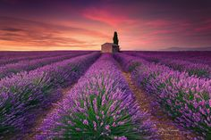 Lavendar Fields Valensole Provence France by Er Landscapes photo by… Beautiful World, Beautiful Places, Beautiful Pictures, Beautiful Beautiful, Belle Image Nature, Landscape Photography, Nature Photography, Travel Photography, Valensole