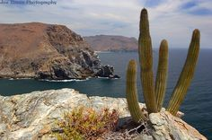 Todos Santos in Baja California Sur, Mexico. We drove (yes drove) from San Diego to Cabo and back. The drive can be better than the destination.