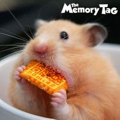 Even this lil dude is eatin up #Memorytag :-) have a remarkably cheesy awesome day peeps :-) if its not a #Memorytag #greetingcard its just lame. #teamalphamale #loveit #awesome #life #California #coolest #freeapp and #greetingcard ever #mma #moments #bestgift #technology #android #apple #google get urs on #amazon.com