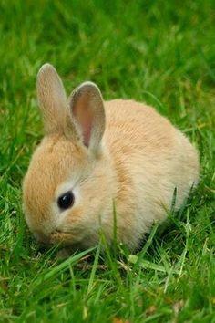 Baby Bunny....I want one!