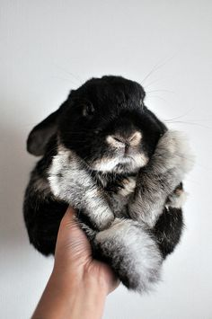 Little bunny. Black and gray rabbit. Le lapin bunny noses are irresistible. And those little rabbit feet. Cute Creatures, Beautiful Creatures, Animals Beautiful, Cute Baby Bunnies, Cute Babies, Bunny Bunny, Bunny Rabbits, Cute Little Animals, Cute Animal Pictures