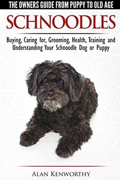 This is a guide about schnoodle breed photos and information. Not a true breed, these affectionate dogs are a cross between a Poodle and a Miniature Schnauzer, and often multigenerational cross bred. Schnoodle Puppy, Schnauzer Puppy, Miniature Schnauzer, Giant Schnauzer, Cockapoo, Schnauzers, Baby Dogs, Pet Dogs, Pets