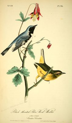 v 2 - The birds of America : - Biodiversity Heritage Library