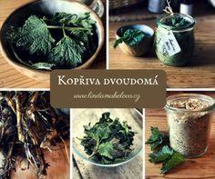 Kopřiva dvoudomá Korn, Herb Garden, Detox, Cabbage, Remedies, Food And Drink, Herbs, Homemade, Vegetables