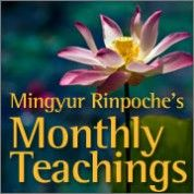 Mingyur Rinpoche's Monthly Teachings