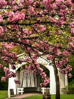 ✿⊱ Spring ⊰✿ Pink tree blossoms and the Jordan Bridge in Stayton Oregon Beautiful World, Beautiful Places, Beautiful Pictures, Trees Beautiful, Lovely Things, Old Bridges, Oregon, Image Nature, D House