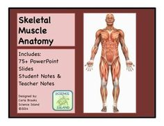 Skeletal System PowerPoint and Notes for high school Anatomy