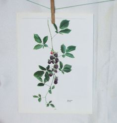 Berry Page