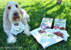 My GBGV Life | enter to win @wellnesspetfood TruFood CocoChia Bakes healthy all natural dog super food snacks