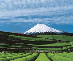 Perhaps the most iconic feature in all of Japan, this active and often snowcapped volcano is an object of both artistic inspiration and spiritual pilgrimage. #MountFuji