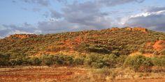 Photo guide to Australian geckos - Eyrean Basin